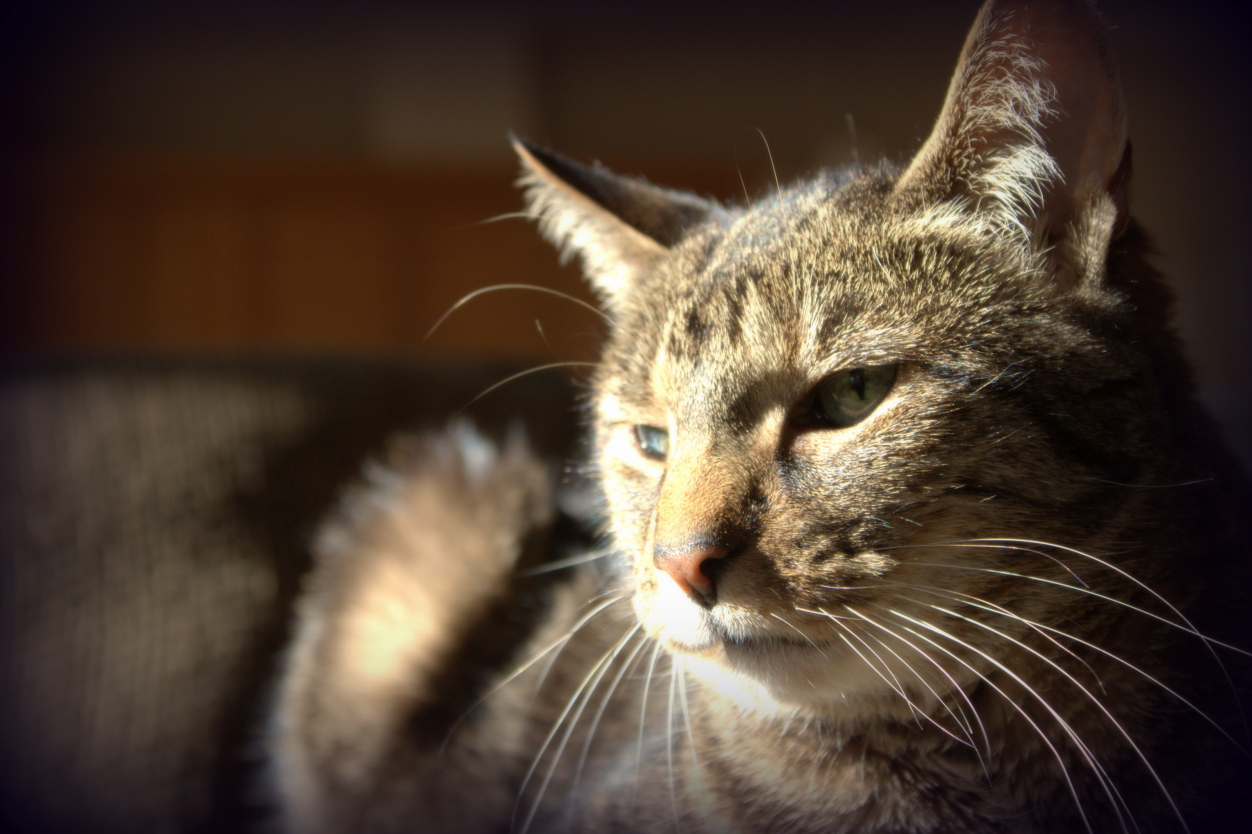 How Do I Know if My Cat or Dog is Experiencing Pain?